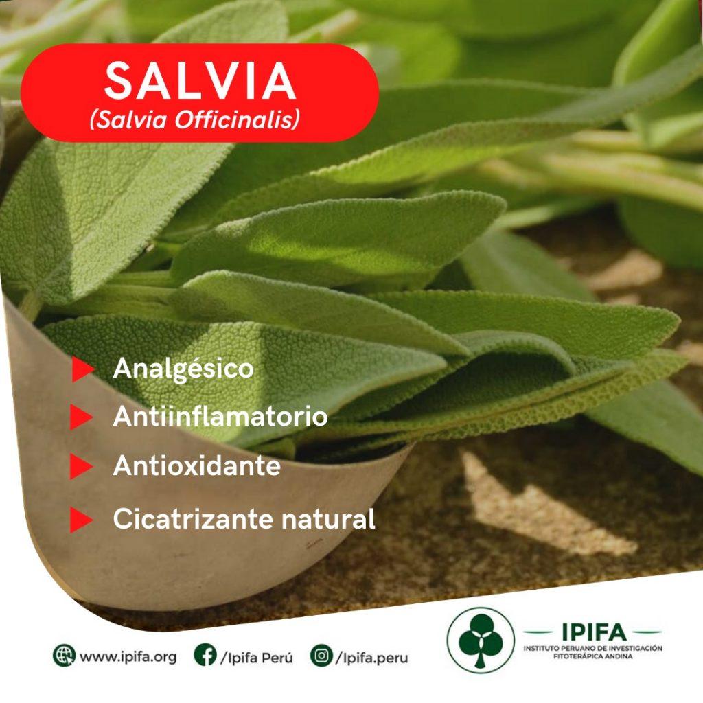 Salvia ipifa